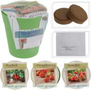 VEGETABLE GROWING POT 3 ASSORTED SEEDS