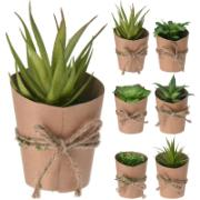 SUCCULENT PLANT POT 15CM 6ASS